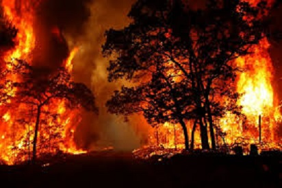 وسعت آتش سوزي جنگل در غرب خوزستان 17 هكتار اعلام شد